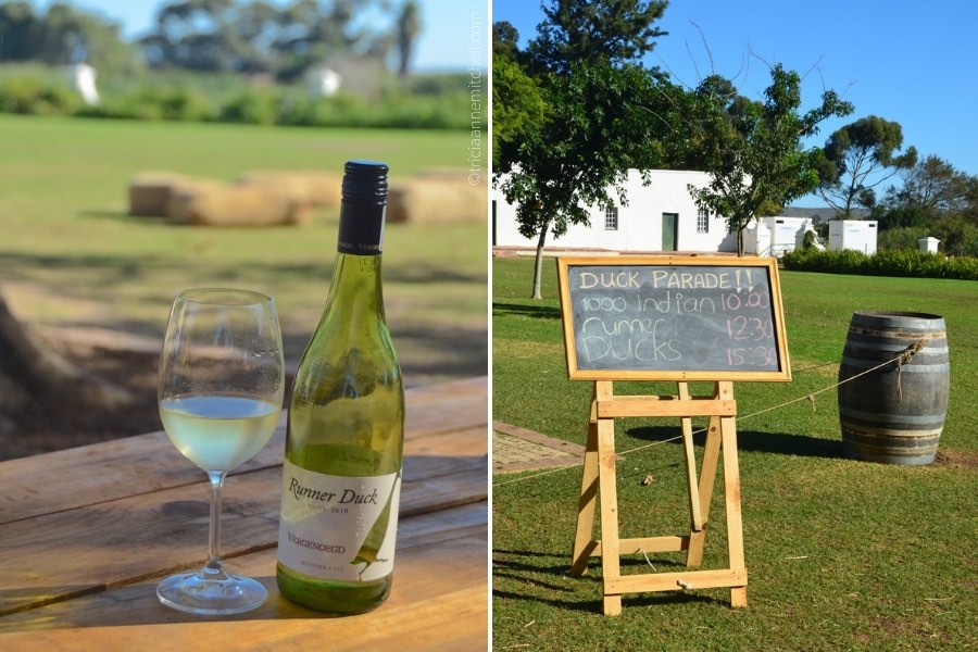 Vergenoegd Winery wine duck parade Stellenbosch South Africa
