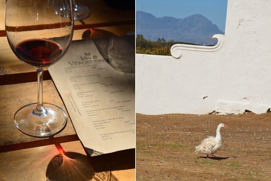 Vergenoegd Winery wine tasting duck procession