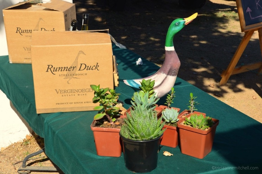 Houseplants for sale Duck Parade