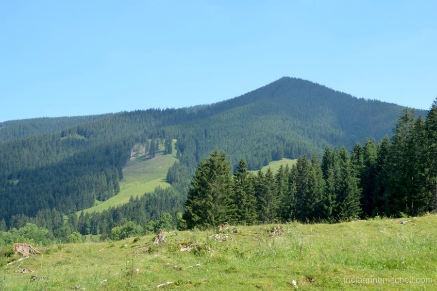 The Aufacker, a forested mountain peak, rises above a canopy of evergreen trees near Oberammergau, Germany. The sky is blue.