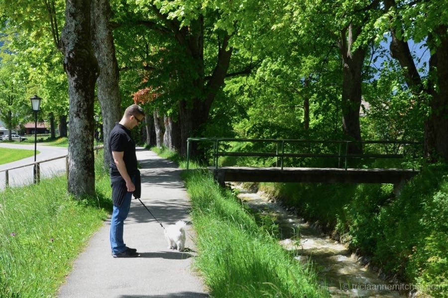 A man walks a white dog along a stream in Oberammergau, Germany. The trees shading the sidewalk are full of green foliage. There is a small pedestrian bridge crossing this small river in Oberammergau, Germany.