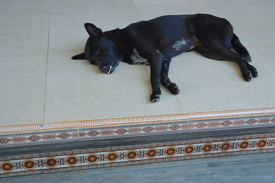 A black dog lies in the courtyard of Ketut Liyer's home in Ubud, Bali.