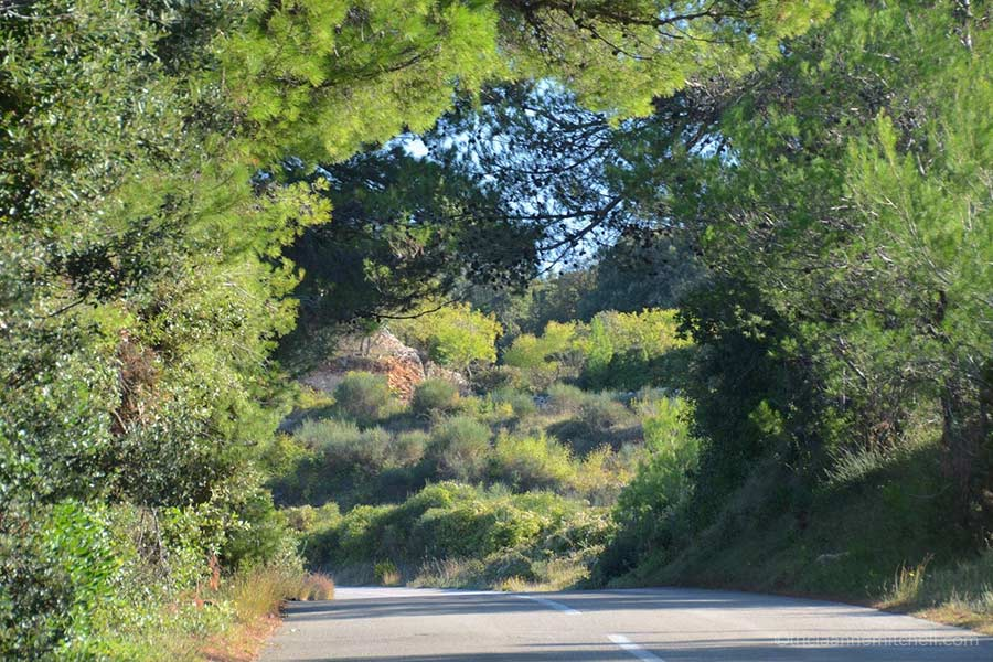A 2-lane road on the island of Brac, which is surrounded by evergreen and deciduous trees.