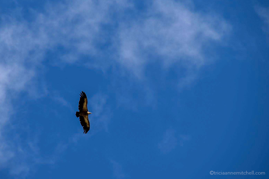 A bird of prey soars above the mountain slopes of the Caucasus. The background is an almost all-blue sky.
