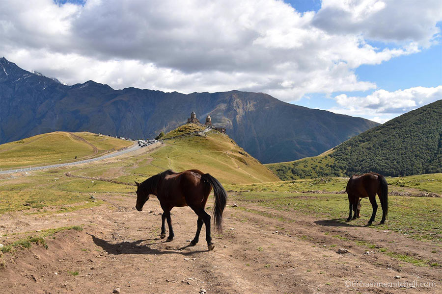 Two brown horses graze on the yellowish-green slopes of the Caucasus Mountains in Georgia. The Gergeti Trinity Church (near Kazbegi) is in the background.