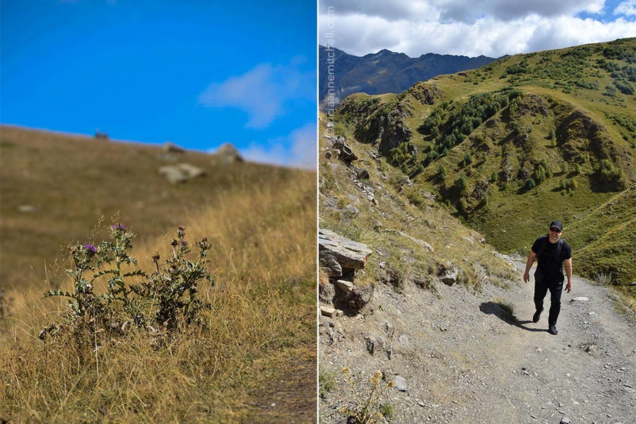 Left: A purple thistle plant grows on a mountain slope near the Gergeti Trinity Church in Kazbegi, Georgia. Right: A man climbs up a semi-rocky path. There is a green mountain slope behind him.