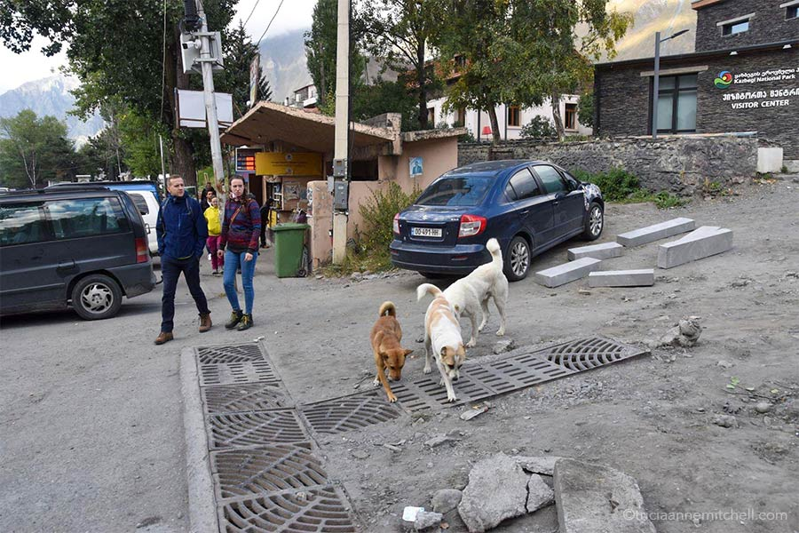 Tourists, as well as three street dogs, walk on a road near Kazbegi's peach-colored taxi stand / marshrutka departure point. They are walking on a street undergoing construction.