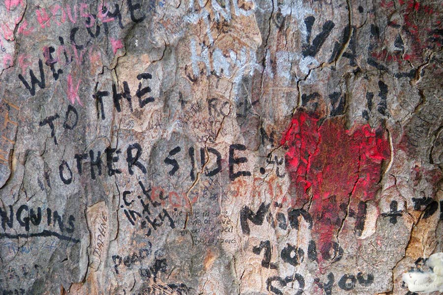 """Near Jim Morrison's grave in Paris' Pere Lachaise Cemetery grows a tree whose trunk contains grafitti from fans. Here you can make out a red heart and the words """"Welcome to the other side."""""""